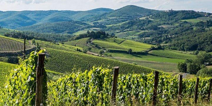 Covid-19 : les viticulteurs italiens se tournent vers la vente en ligne