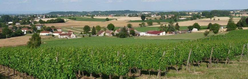 Vignoble de Saint-Pourçain